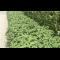 Økologisk Champignonmuld i BIGBAG - 1 m3 inkl. fragt
